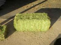 VERY NICE ALFALFA HAY 70 TO 75 POUNDS PER BALE, VERY