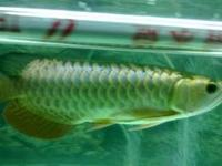We select first grates tropical fishes and sell .They