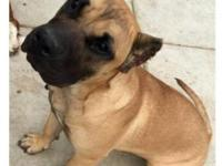 7 month old. Great dog, sweet and gentle. Great with
