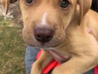 Hi - Im Perfect Preston! I am an 8 week old, 9 pound,