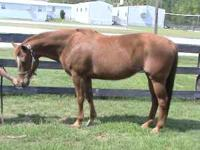 Beyond The Sky is a Reg 15vr old sorrel mare. She is