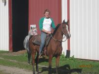 PRETTY BAY ARABIAN7 YR OLD 14.3HH MARE STARTED RINGWORK