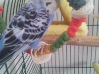 Definitely Sweet and Loving Child Parakeet, he is the