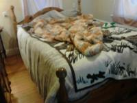 I have a very nice queen size bed for sale has drawers