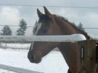 '02 registered Quater horse gelding offered for sale.