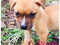 Prima's story You can fill out an adoption application