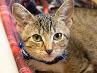 My story Prince Charming is a male, neutered kitten,