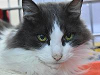 Prince's story Very Affectionate and Outgoing, Loves