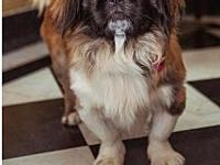 Prince Louie's story Prince Louie is a 2 year old Shih