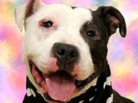 Princess's story (ID #A39075165) This is Princess,