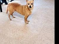 Princess's story Princess has been at the shelter since