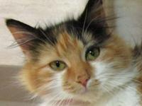 If you are interested in adopting Princess, call to