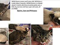 Princess's story This beautiful girl just came in from