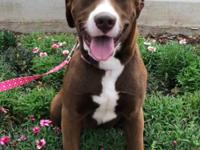 Princess is a very sweet 68 lb. female lab mix around 1