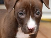 PRINCESS IS A SWEET AND LOVING, PLAYFUL CHOCOLATE
