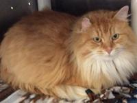 Princess Penelope is a gorgeous long haired lady who