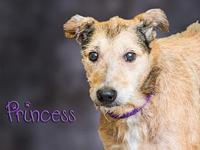 Princess's story Princess was brought to the shelter by