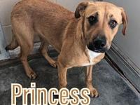 My story Princess is a 9-11 month old black mouth cur