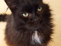Princeton is a handsome 5 year old boy looking for