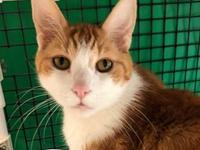 Pringle is a sweet guy who has been with us before. He