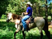 Quarter Horse Mare. 16 year old Sorrel Mare. Great