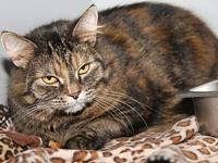 Prissy Cat's story Prissy Cat is a beautiful 5-year old