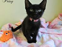 Prissy's story Prissy is the talkative runt of her