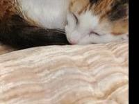 Prissy's story Chubby and Prissy are a bonded pair at
