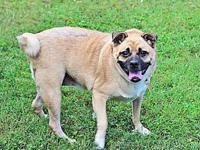 PRISSY's story Prissy  is a female puggle who was
