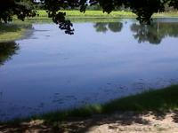 I have a private pond for fishing. Catfish, Bass and