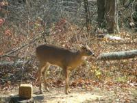 Offering Private Turkey and Deer Hunts for this coming
