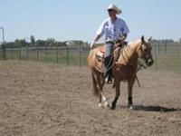 Sale only NO Trades Finished heeling/calf roping horse.