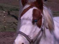 ******* This is a very nice three year old mare .*****