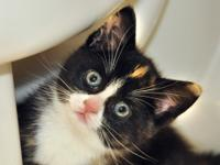 Prosecco is an adorable calico that came to WOTNVR with