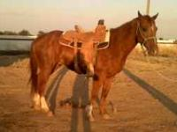 4yr AQHA papered gelding he is very good looking 14.3