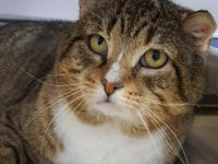 Meet Proton, a big 2 year old boy looking for love!