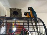 Proven bonded pair who have produced chicks for the