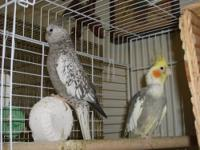 I have a male and female star finch for sale, complete