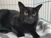 Prudence is a very playful cat that loves toys and