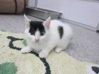 Prue's story I am a 2 month old kitten and I am ready