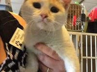 Pryde little 16 week old kitten spayed was found with
