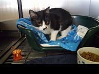Puddles is a 6 month old female kitten who found