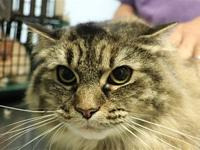 Puddy's story Puddy is a nice girl who is looking for a