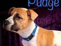 My story Meet Pudge! He is a Boxer Mix puppy born