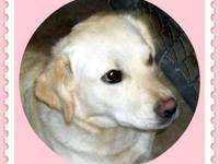 Pug - Aubrey/pending Adoption - Small - Young - Female