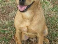 Pug - Cooper - Medium - Adult - Male - Dog Hello, the