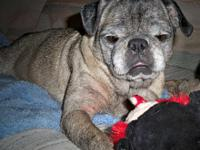 Pug - Freya - Small - Senior - Female - Dog Hi! My name