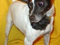 Pug - Tinkerbelle - Small - Adult - Female - Dog My