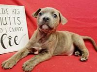 Pumba's story 4 puppies found in a park, dumped in the