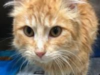 Pumpkin's story Super sweet and cute!! Come meet her at